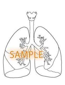 画像1: 肺
