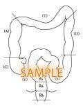 大腸ー構成図