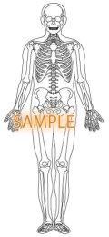 骨格図-全身前体型有り